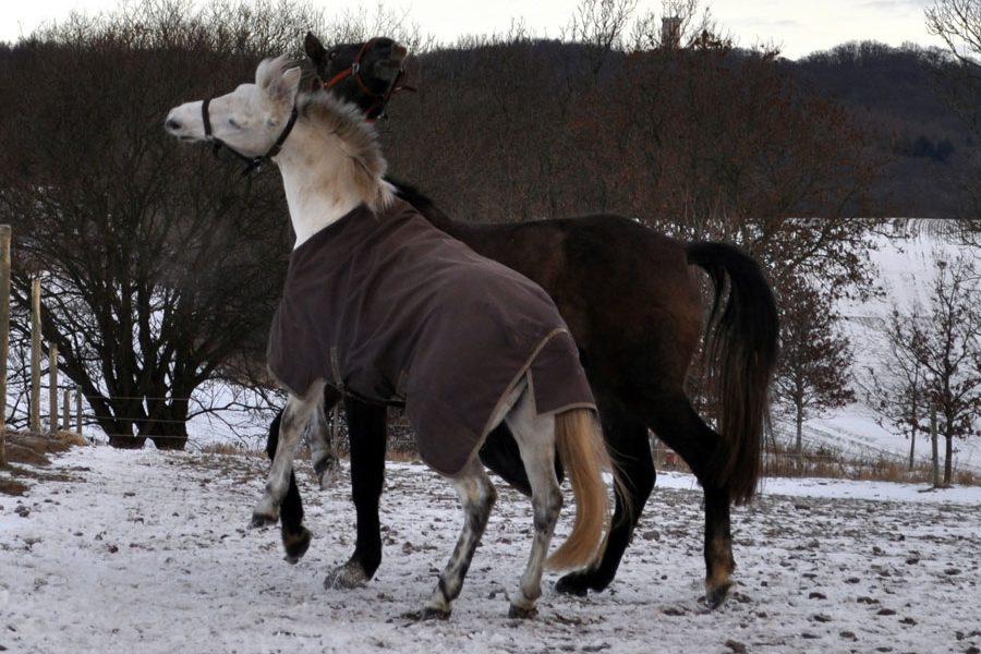 impressionen-pferdehof-burtevitz-13