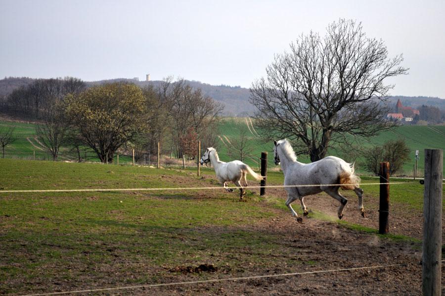 impressionen-pferdehof-burtevitz-14