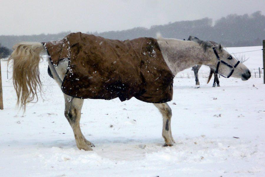 impressionen-pferdehof-burtevitz-20